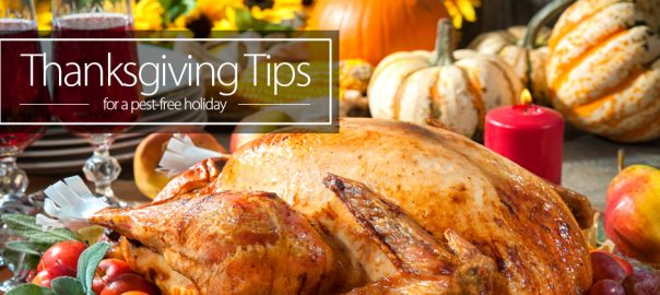 Pest Prevention for Your Thanksgiving Feast