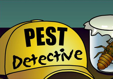 Pest Detective Game