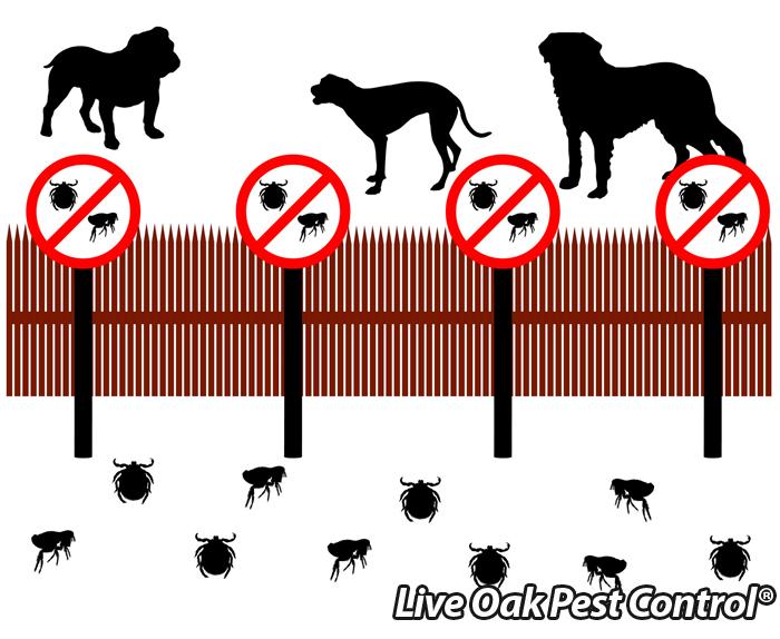Fleas April Pest Of The Month
